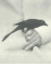 bird-black-and-white-fly-Favim.com-250629