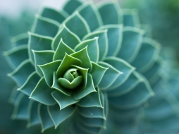 nature-plants-picture-beautiful-and-spiral-plant-wide-open-leaves