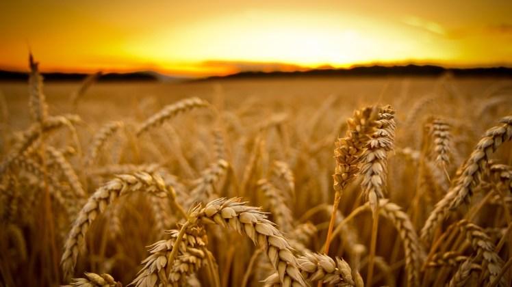 harvest-038